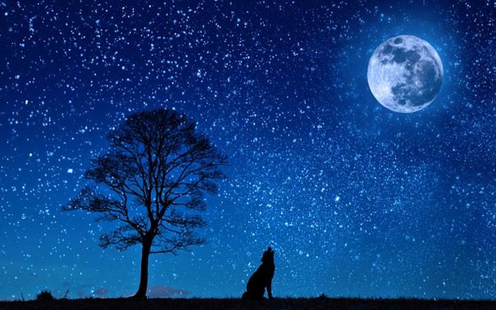 Wierszopis – Jedno takie życzenie